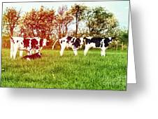 Calves In Spring Field Greeting Card