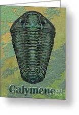 Calymene Niagarensis Greeting Card