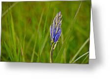 Camas Flower Pod Greeting Card
