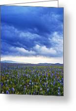 Camas Glory At Camas Prairie In Idaho Greeting Card