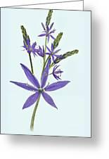 Camas, The Flowers Greeting Card
