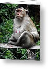 Cambodia Monkeys 3 Greeting Card