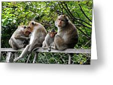 Cambodia Monkeys 5 Greeting Card