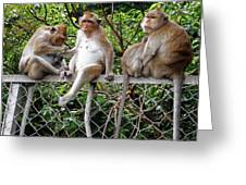 Cambodia Monkeys 7 Greeting Card