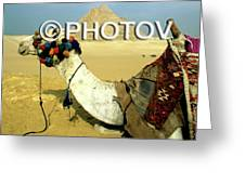 Camel And The Great Pyramids Of Giza - Egypt Greeting Card