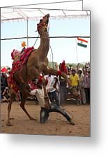 Camel Dance Pushkar Greeting Card