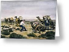 Camel Express, 1857 Greeting Card