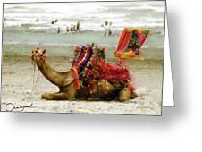 Camel For Ride  Greeting Card