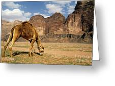 Camel Grazing In A Desert Landscape Greeting Card by Sami Sarkis