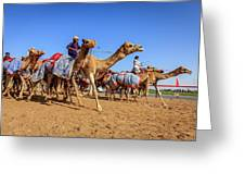 Camel Racing In Dubai Greeting Card