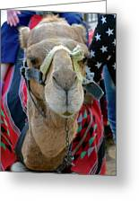 Camel Ride Greeting Card