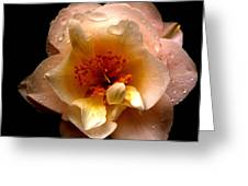 Camelia Greeting Card by Scott Gould