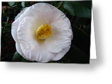 Camellia 1 Greeting Card