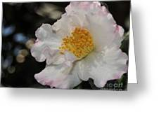 Camellia 1 Greeting Card