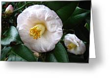 Camellia 2 Greeting Card