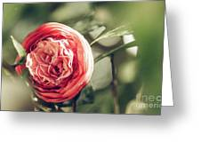 Camellia 3 Greeting Card
