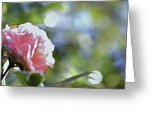 Camellia And Early Light Greeting Card