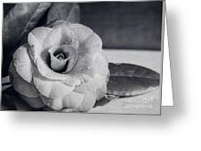 Camellia Back And White Greeting Card