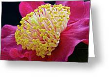 Camellia Centre Greeting Card