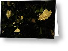 Camellia Glow Greeting Card