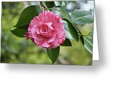 Camellia Hybrid Greeting Card