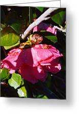 Camellia Light And Bud Greeting Card