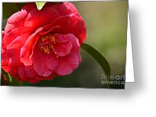 Camellia Rosette Greeting Card