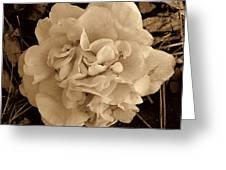 Camellia Sepia Greeting Card