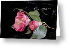 Camellia Still Life Greeting Card