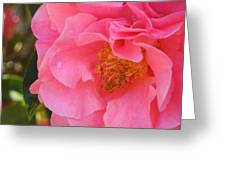 Camellias Of The South Greeting Card