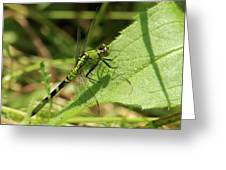 Cameo Green Dragonfly Greeting Card