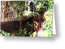 Camera Shy Donkey Greeting Card