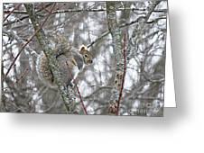 Camera Shy Grey Squirrel Greeting Card