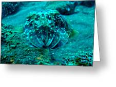 Camo Cuttlefish Greeting Card