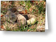Camouflage Master ... Montana Art Photo Greeting Card