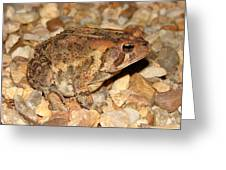Camouflage Toad Greeting Card