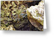 Camouflaged Crab Greeting Card