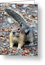 Campground Chipmunk Greeting Card