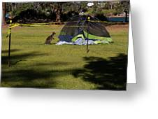 Camping With Swamp Wallaby Greeting Card