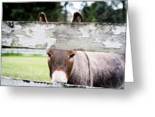 Can I Burro Your Camera? Greeting Card