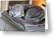 Can I Come With You Greeting Card