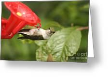 Can I Help You Hummingbird  Greeting Card