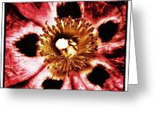 Can You Guess What Flower? Hints: It's Greeting Card