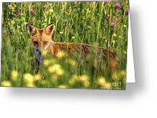 Can You See Me Greeting Card
