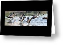 Canada Geese 1390-011618-1 Greeting Card