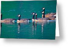 Canada Geese 2 Greeting Card
