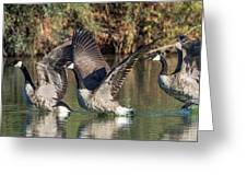 Canada Geese 5659-092217-1cr-p Greeting Card
