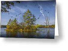 Canada Geese Flying By A Small Island On Hall Lake Greeting Card