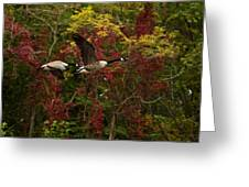 Canada Geese In Autumn Greeting Card