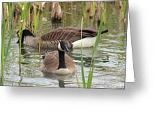 Canada Geese In Pond Greeting Card
